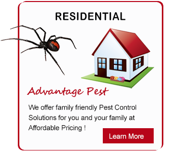5 Star Pest Solutions, 5 Star Pest Solutions Hervey Bay, Pest solutions Hervey Bay, pest control Hervey Bay, ant pest removal Hervey Bay, ant infestation Hervey Bay, cockroach pest control Hervey Bay, Ants pest control Hervey Bay, spiders pest control Hervey Bay, Pest Control Hervey Bay, 5 Star Pest Solutions, 5 Star Pest Solutions Maryborough, Pest solutions Maryborough, pest control Maryborough, ant pest removal Maryborough, ant infestation Maryborough, cockroach pest control Maryborough, Ants pest control Maryborough, spiders pest control Maryborough, Pest Control Maryborough, pest control Wide Bay region, industrial pest inspections, industrial pest management hervey bay,