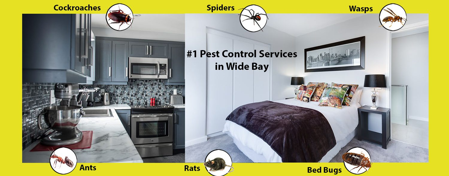 5 Star Pest Solutions, 5 Star Pest Solutions Hervey Bay,  Pest solutions Hervey Bay, pest control Hervey Bay, ant pest removal Hervey Bay, ant infestation Hervey Bay, cockroach pest control Hervey Bay, Ants pest control Hervey Bay, spiders pest control Hervey Bay, Pest Control Hervey Bay, 5 Star Pest Solutions, 5 Star Pest Solutions Maryborough,  Pest solutions Maryborough, pest control Maryborough, ant pest removal Maryborough, ant infestation Maryborough, cockroach pest control Maryborough, Ants pest control Maryborough, spiders pest control Maryborough, Pest Control Maryborough, pest control Wide Bay region, industrial pest inspections, industrial pest management hervay bay,